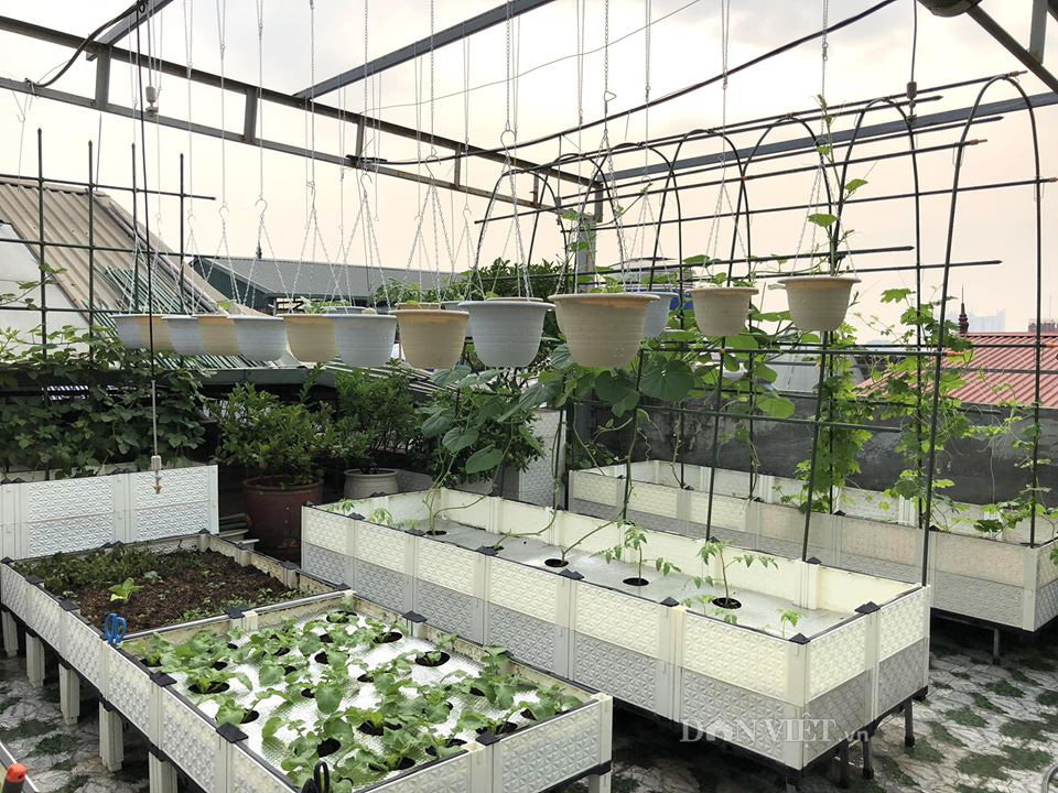 Choáng với khu vườn ngập rau xanh, quả ngọt trên sân thượng của mẹ đảm Hà thành - Ảnh 2.