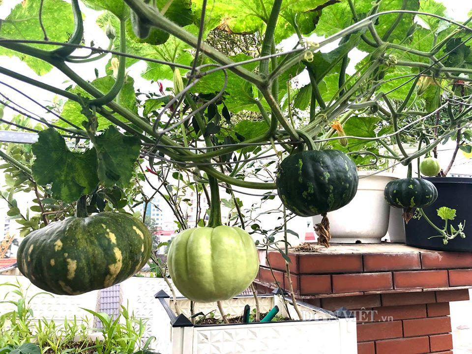 Choáng với khu vườn ngập rau xanh, quả ngọt trên sân thượng của mẹ đảm Hà thành - Ảnh 9.