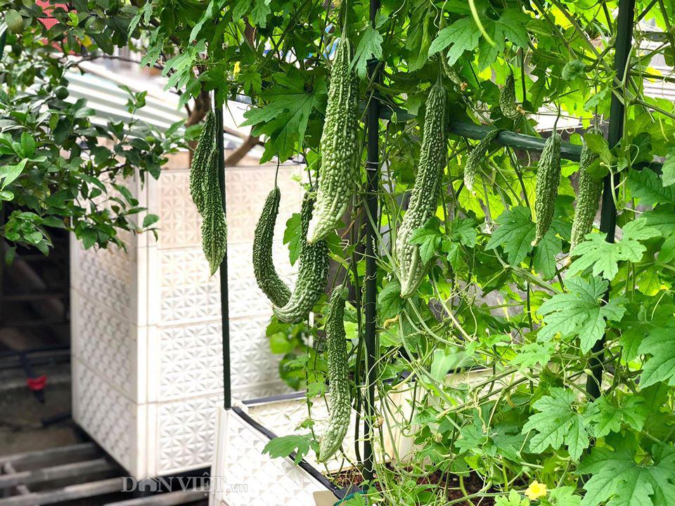 Choáng với khu vườn ngập rau xanh, quả ngọt trên sân thượng của mẹ đảm Hà thành - Ảnh 11.