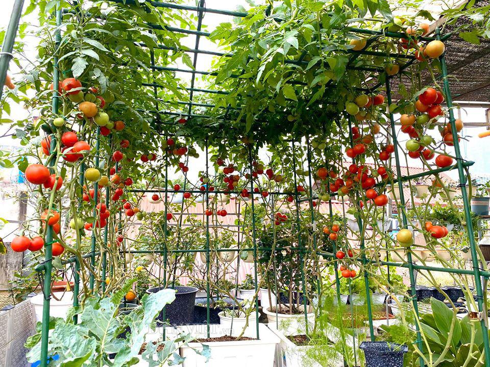 Choáng với khu vườn ngập rau xanh, quả ngọt trên sân thượng của mẹ đảm Hà thành - Ảnh 6.