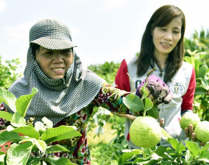 Từ công nhân trở về quê trồng ổi, rau thu nửa triệu/ngày - Ảnh 3.