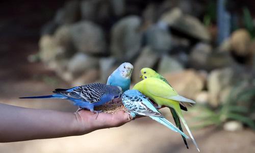Vườn thú 'kiểu Australia' gần Đà Lạt - Ảnh 1.
