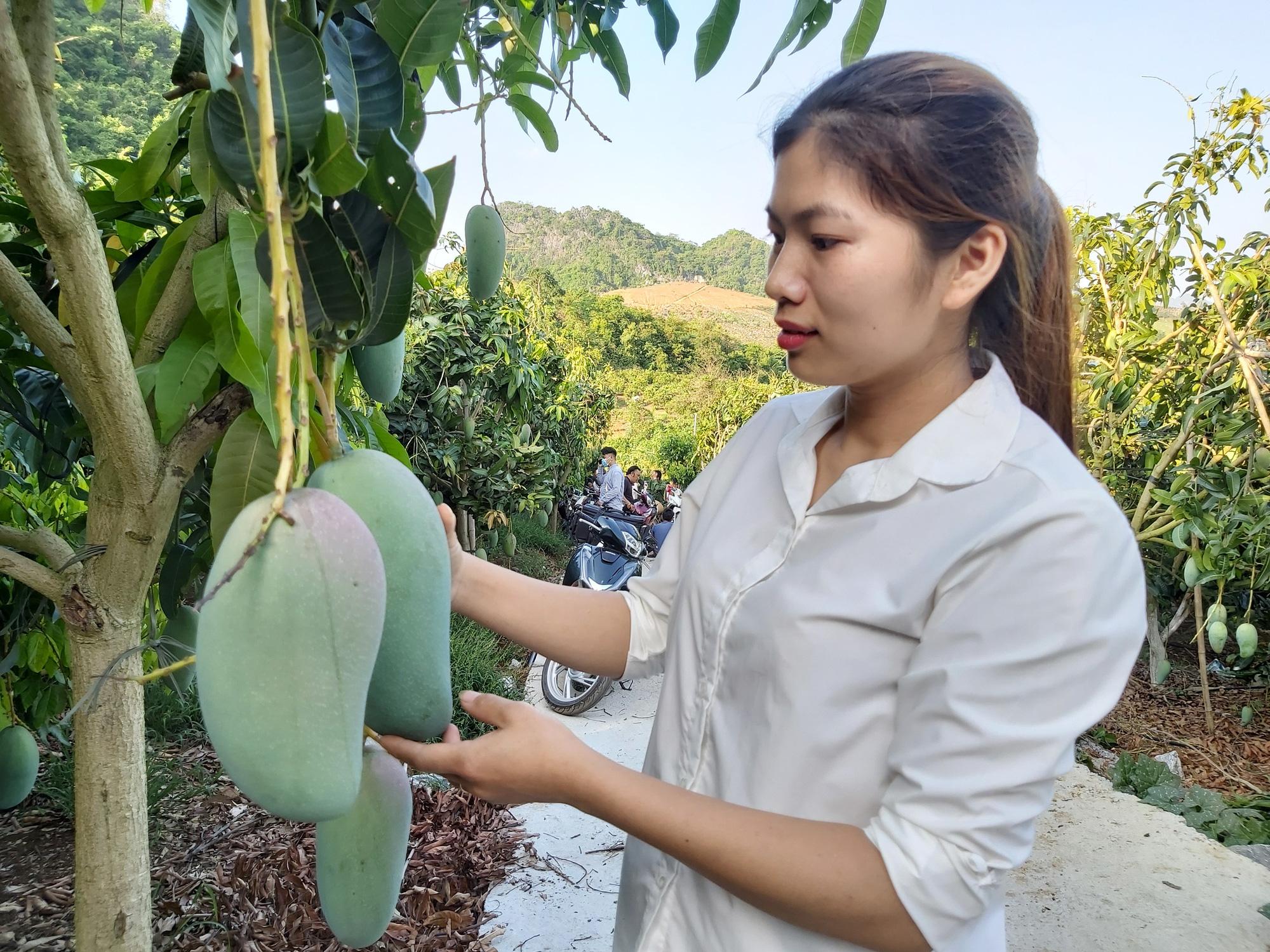 """Sơn La: """"Cầm tay chỉ việc"""" trong sử dụng thuốc BVTV, dân thu tiền tỷ từ cây xoài - Ảnh 5."""