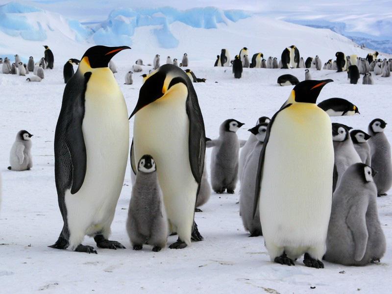 Các nhà khoa học mắc hội chứng lạ vì ngửi phân chim cánh cụt ở Nam Cực - Ảnh 1.