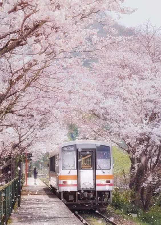 Sốc: Tỷ lệ người tự sát ở Nhật giảm 20% trong thời gian dịch bệnh, thấp nhất trong 5 năm trở lại đây! - Ảnh 1.