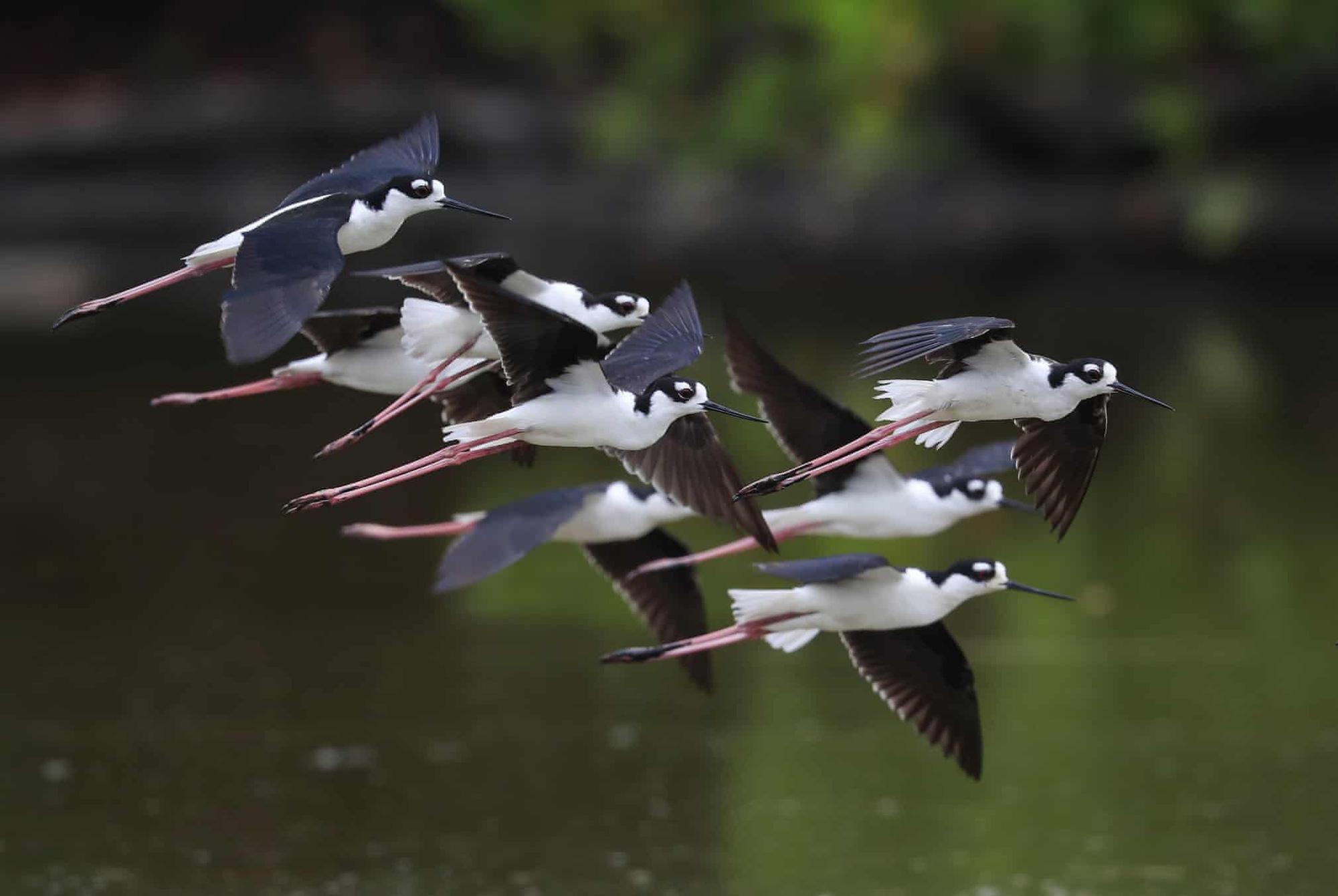Đại bàng đầu trắng tóm con mồi lọt top 15 ảnh động vật đẹp tuần qua - Ảnh 2.
