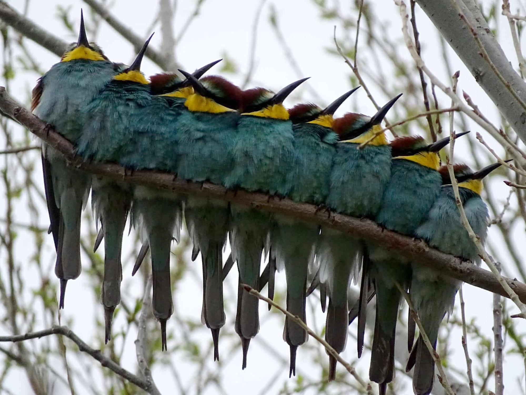 Đại bàng đầu trắng tóm con mồi lọt top 15 ảnh động vật đẹp tuần qua - Ảnh 4.