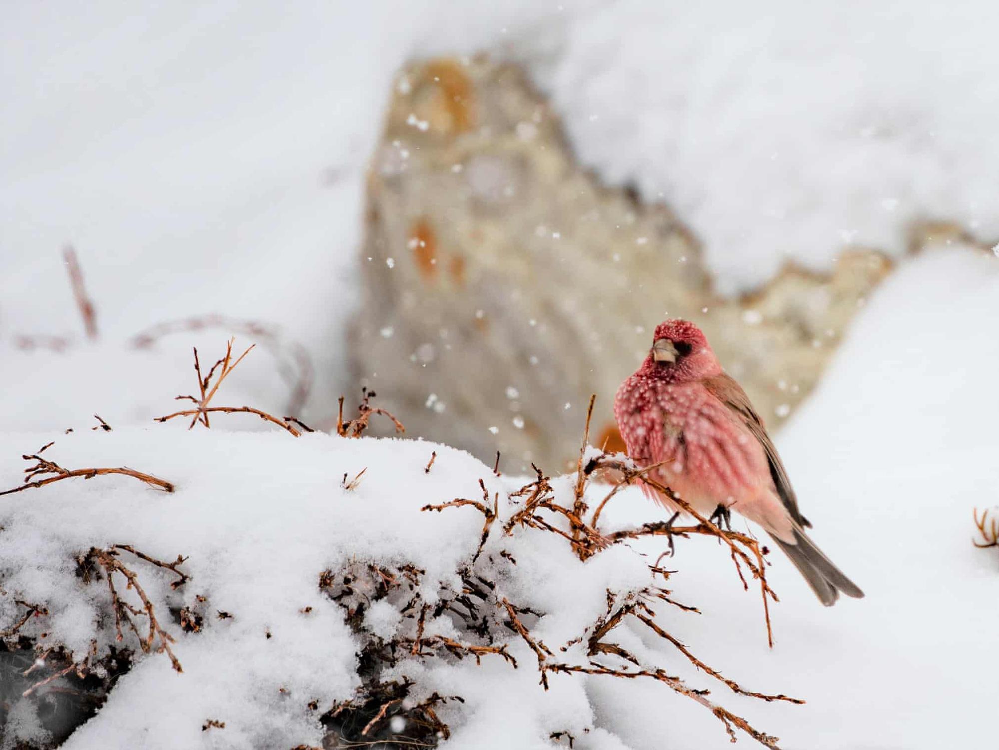 Đại bàng đầu trắng tóm con mồi lọt top 15 ảnh động vật đẹp tuần qua - Ảnh 6.