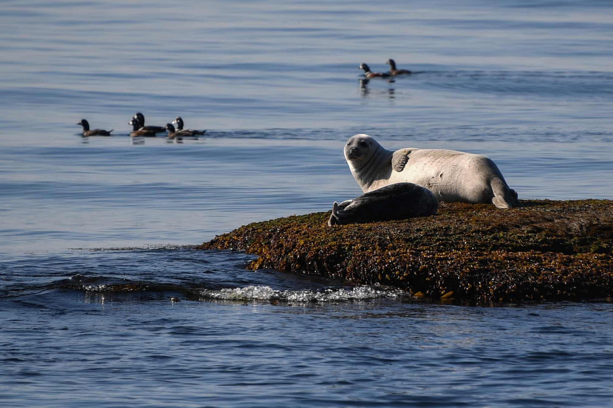 Đại bàng đầu trắng tóm con mồi lọt top 15 ảnh động vật đẹp tuần qua - Ảnh 7.