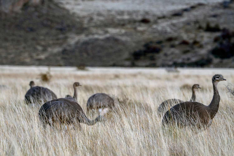 Đại bàng đầu trắng tóm con mồi lọt top 15 ảnh động vật đẹp tuần qua - Ảnh 12.