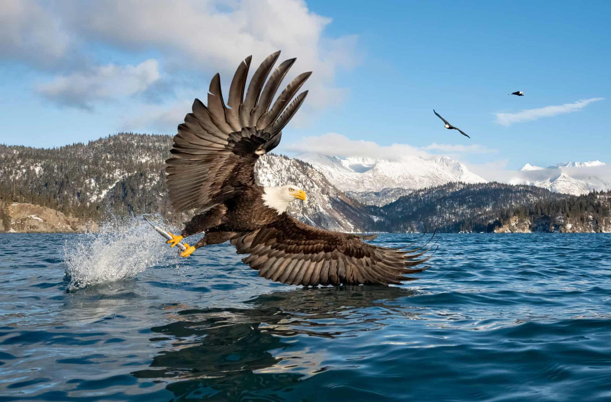 Đại bàng đầu trắng tóm con mồi lọt top 15 ảnh động vật đẹp tuần qua - Ảnh 15.