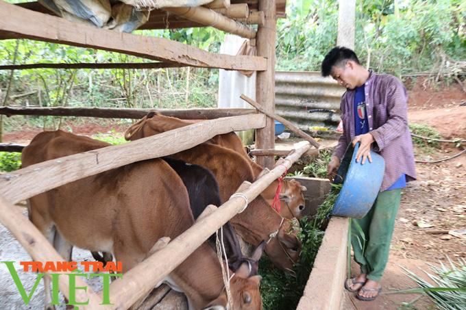 Hiệu quả từ nguồn Quỹ Hỗ trợ nông dân Thuận Châu - Ảnh 3.
