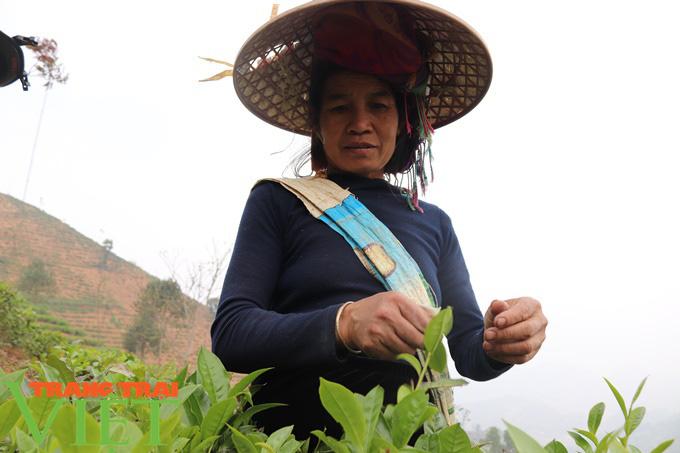 Hiệu quả từ nguồn Quỹ Hỗ trợ nông dân Thuận Châu - Ảnh 1.