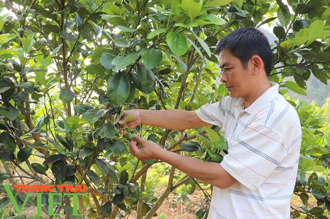 Hiệu quả từ nguồn Quỹ Hỗ trợ nông dân Thuận Châu - Ảnh 2.