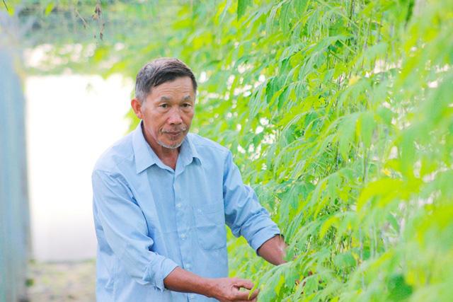Quảng Bình: Hai bố con trồng rau sạch cung cấp cho trường học - Ảnh 1.