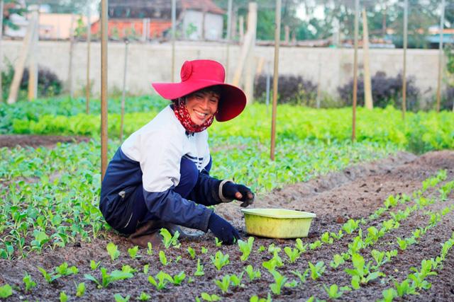 Quảng Bình: Hai bố con trồng rau sạch cung cấp cho trường học - Ảnh 4.
