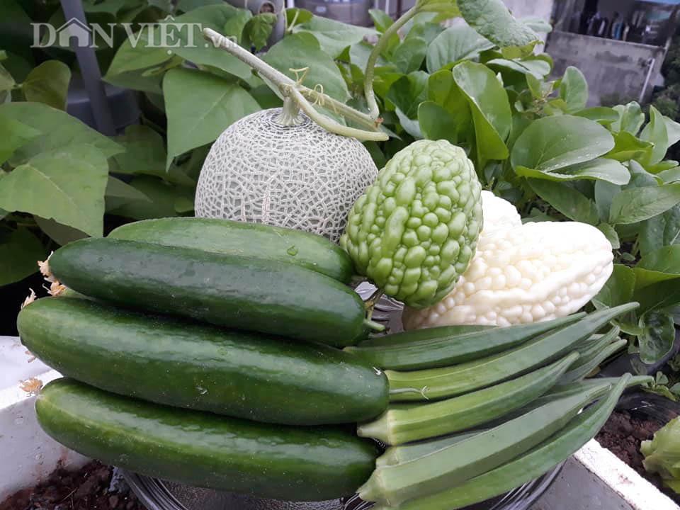 Một phụ nữ ở Hà Nội trồng dưa lưới trên sân thượng, trái nào cũng to bự, mỗi năm thu 3 tạ dưa - Ảnh 9.