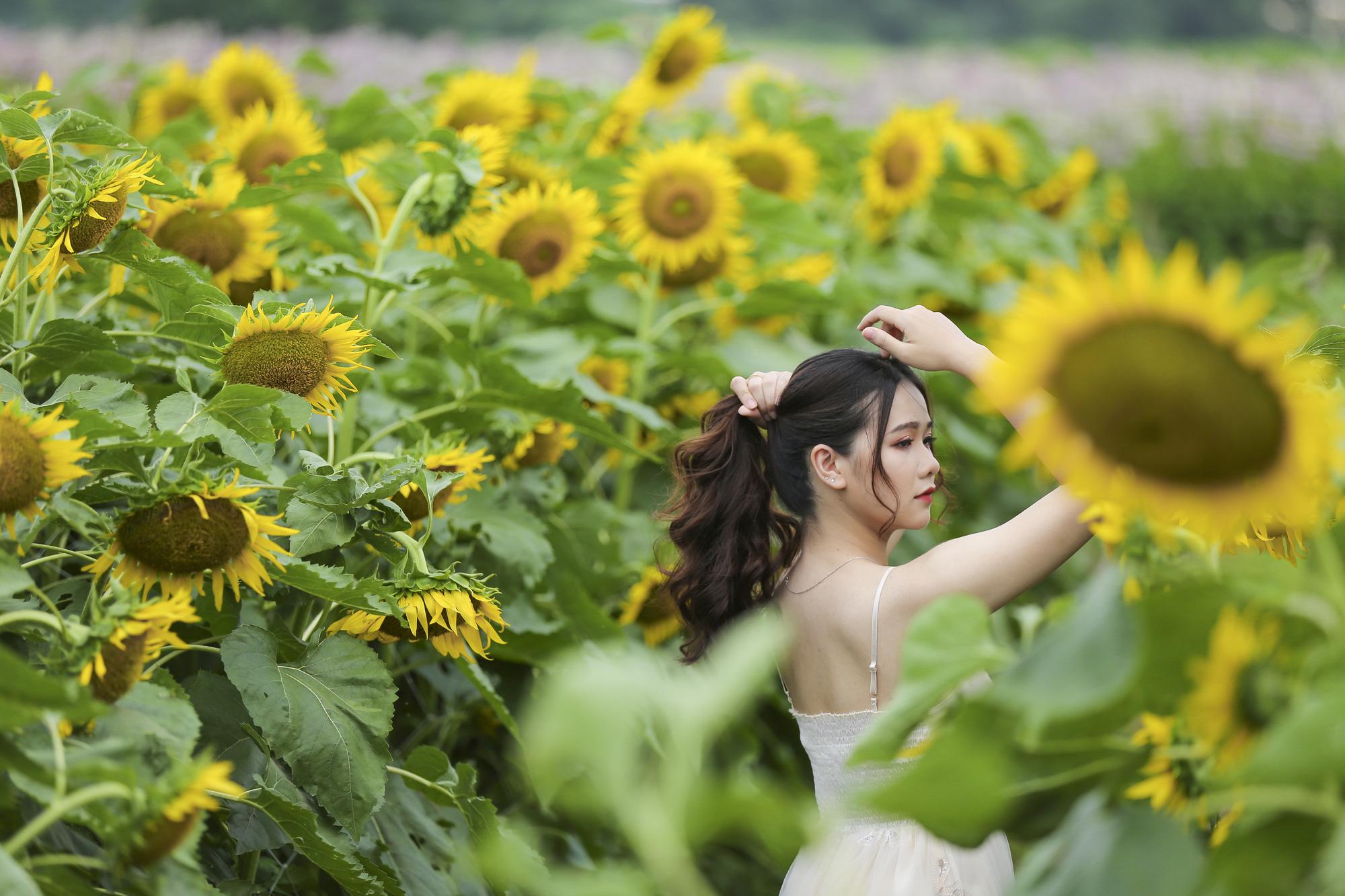 Hoa hướng dương tuyệt đẹp, giới trẻ đổ xô đến chụp ảnh - Ảnh 4.