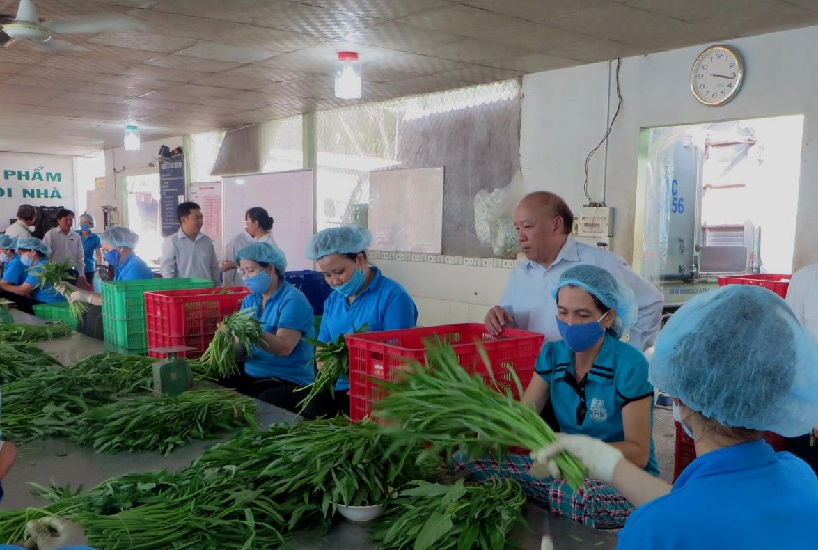 HTX - đòn bẩy tăng thu nhập nông thôn - Ảnh 1.