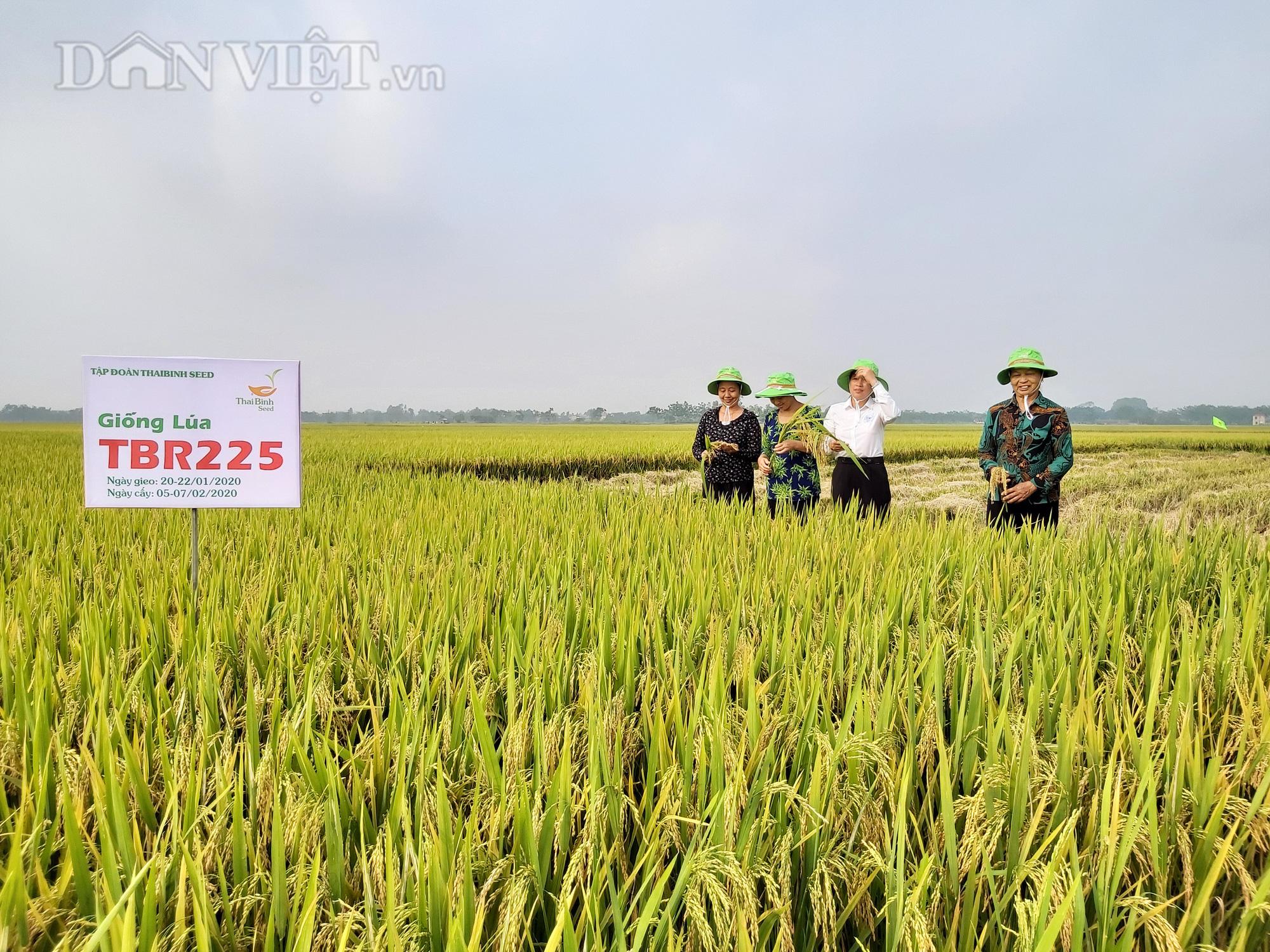 Gặp thời tiết bất thuận, lúa TBR225 vẫn cho mùa bội thu tại Vĩnh Phúc - Ảnh 2.