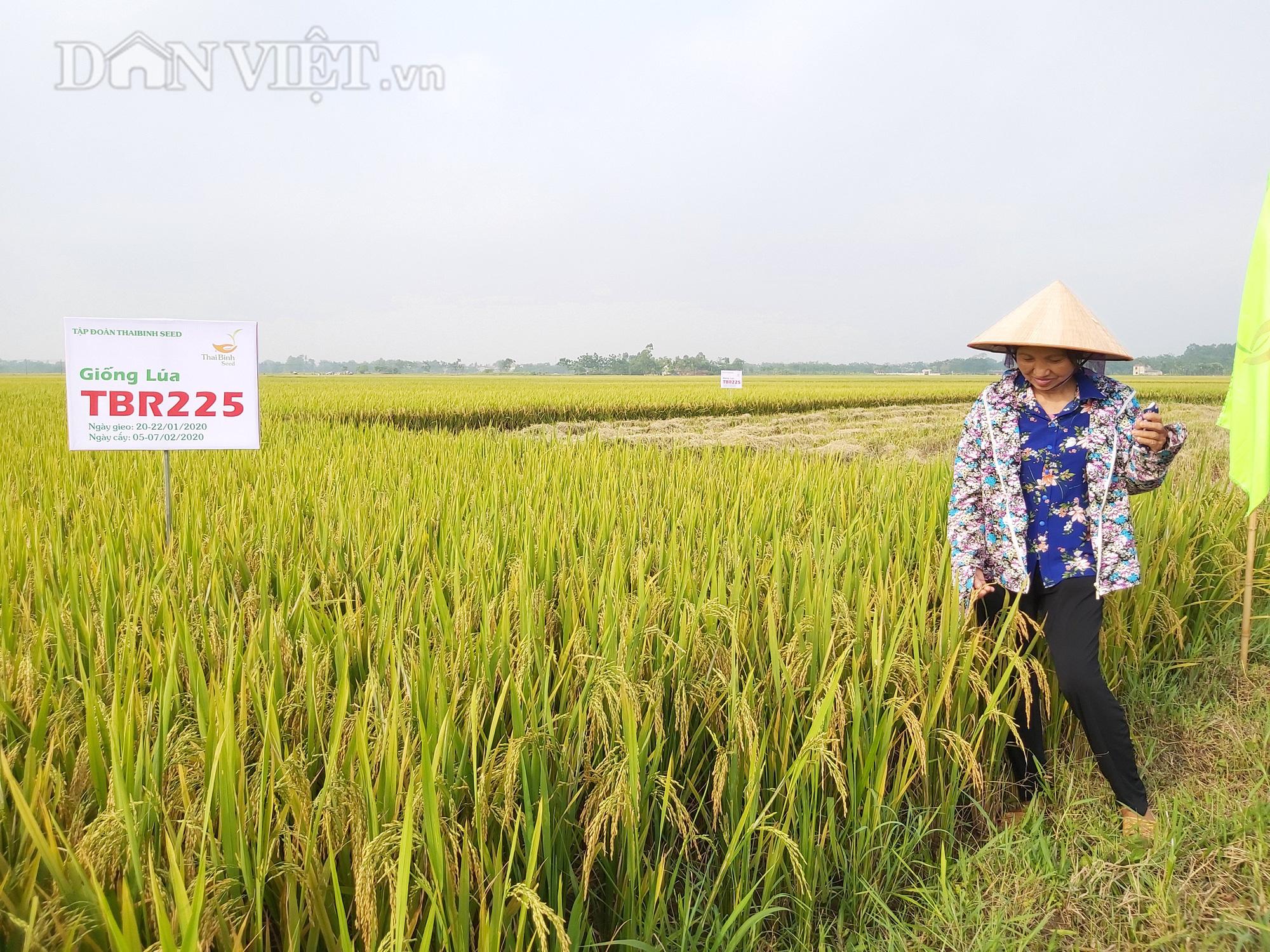 Gặp thời tiết bất thuận, lúa TBR225 vẫn cho mùa bội thu tại Vĩnh Phúc - Ảnh 6.