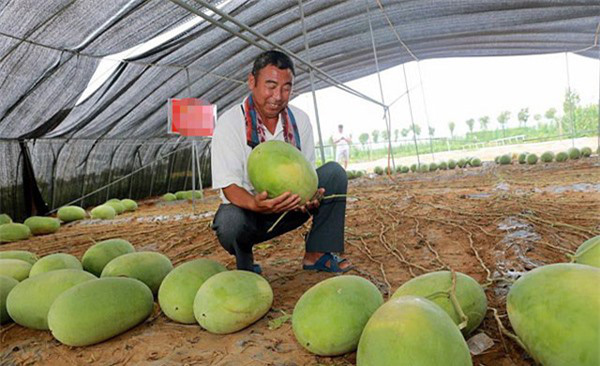 """Mãn nhãn những loại cây """"mắn"""" nhất thế giới, có cây cho hàng chục nghìn quả - Ảnh 5."""