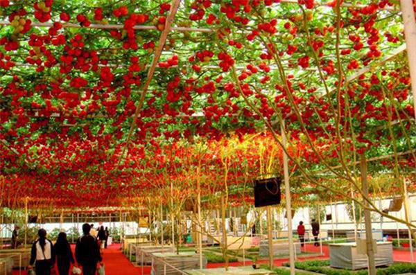 """Mãn nhãn những loại cây """"mắn"""" nhất thế giới, có cây cho hàng chục nghìn quả - Ảnh 7."""