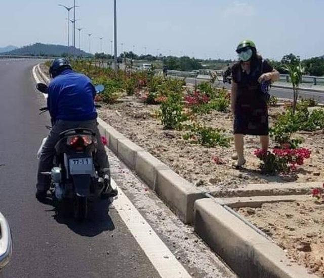 3.000 cây hoa giấy bị nhổ trên quốc lộ: Có thể khởi tố hình sự - Ảnh 1.