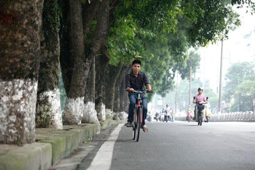 Bất ngờ lớn về doanh nghiệp bỏ rơi 106 cây xanh dự án đường sắt trên cao Nhổn - Ga Hà Nội? - Ảnh 6.