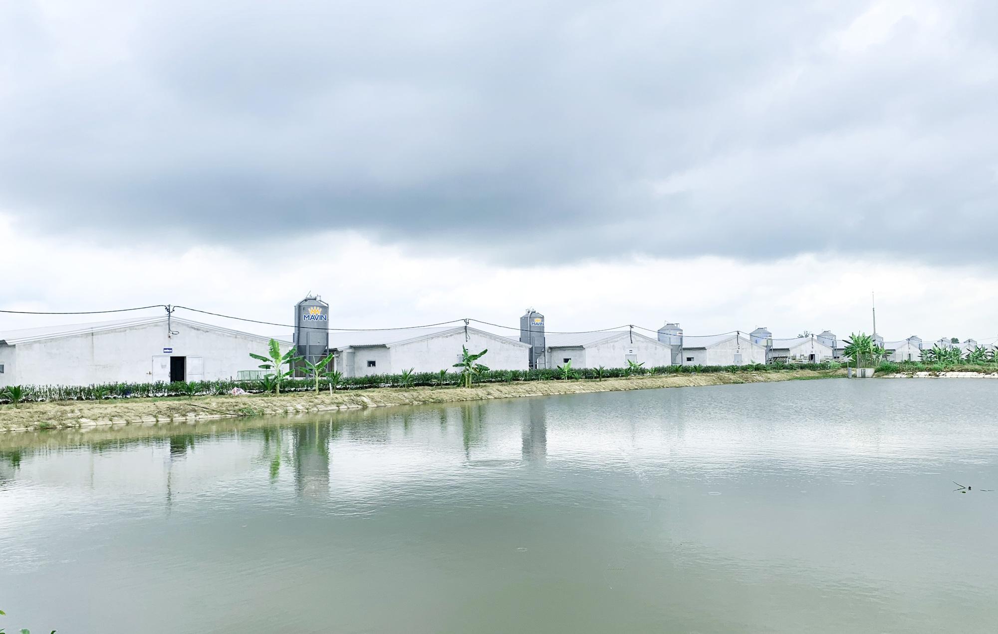 Cần nâng cao vị thế ngành gia cầm Việt Nam, hướng tới xuất khẩu - Ảnh 4.