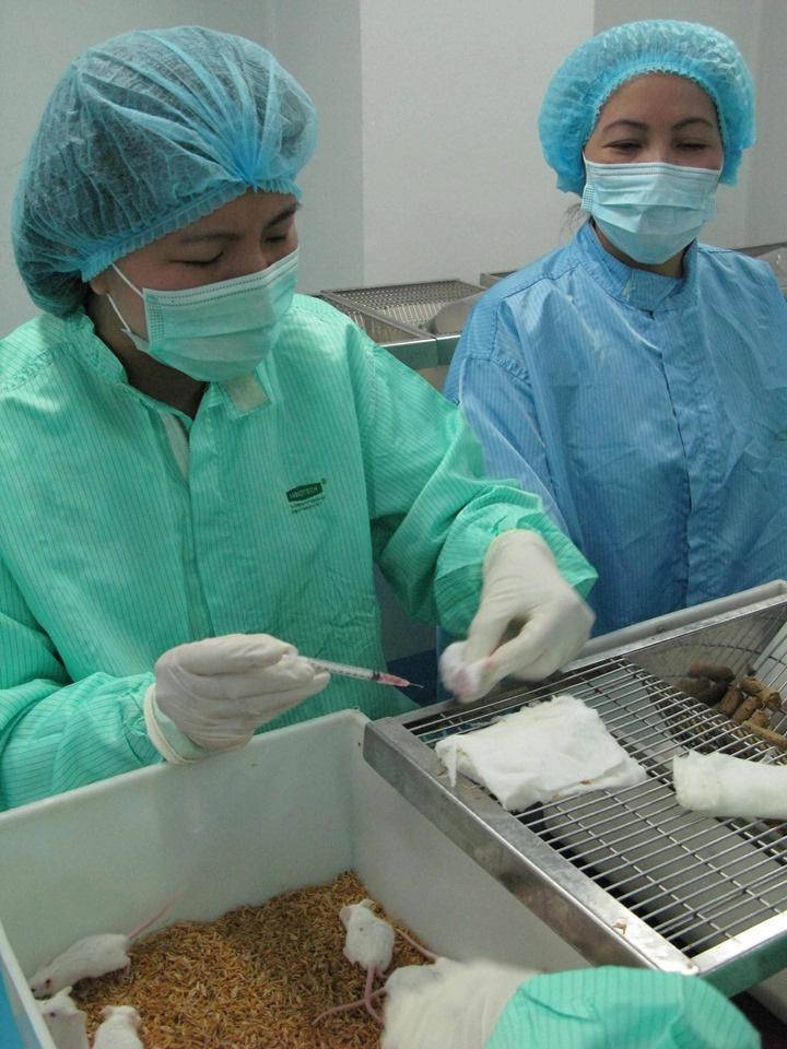 Việt Nam thử nghiệm đợt 2 tiêm vắc-xin ngừa COVID-19 trên chuột - Ảnh 1.