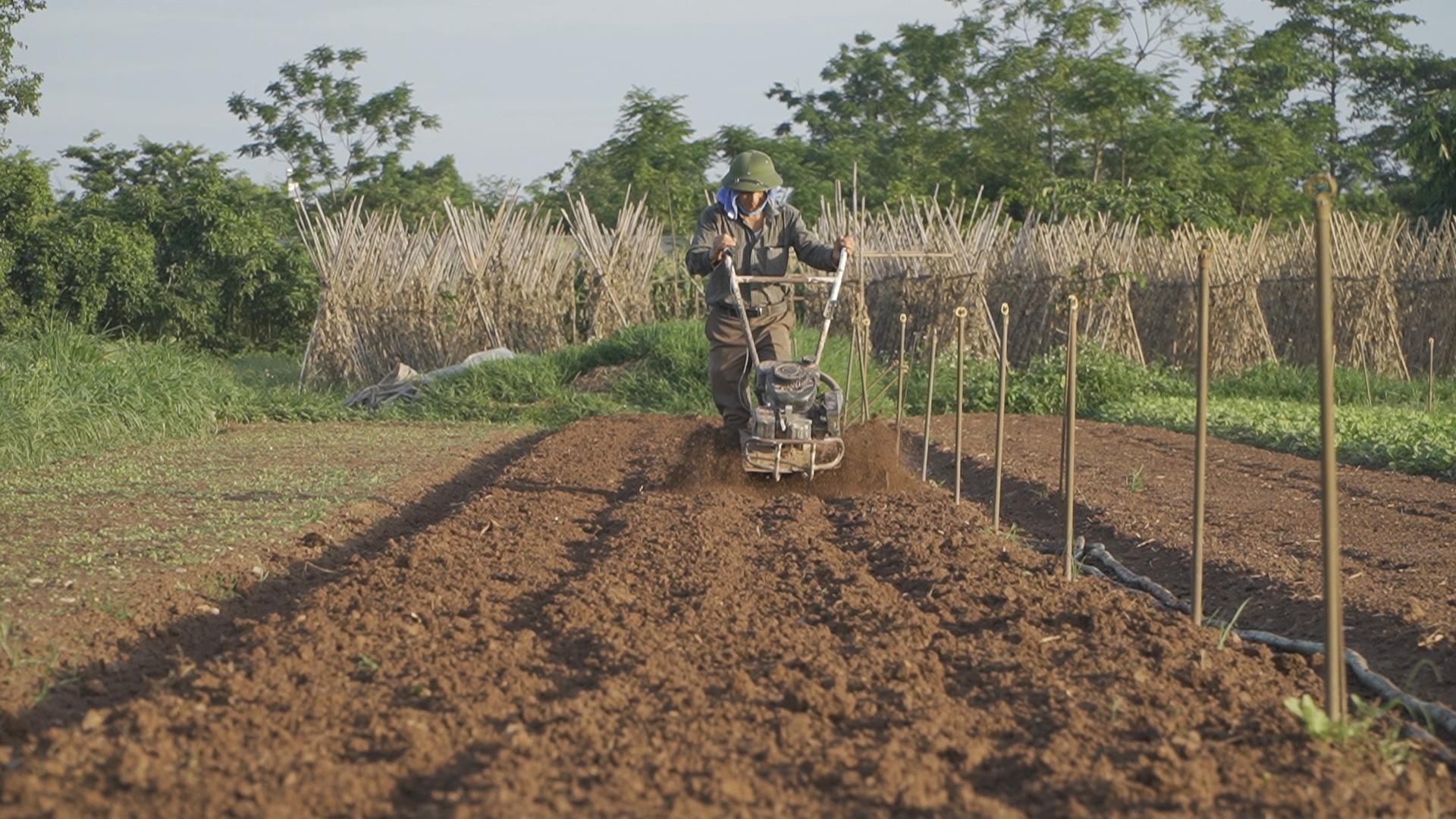Nông dân thảnh thơi trồng rau an toàn