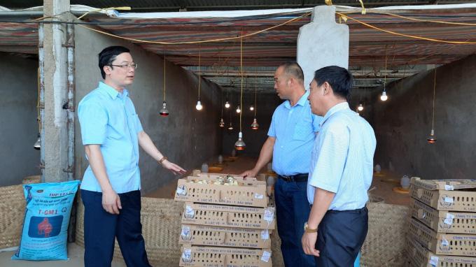 Tập đoàn Dabaco tặng miễn phí 50.000 con gà giống J-Dabaco cho nông dân Hà Nam - Ảnh 2.
