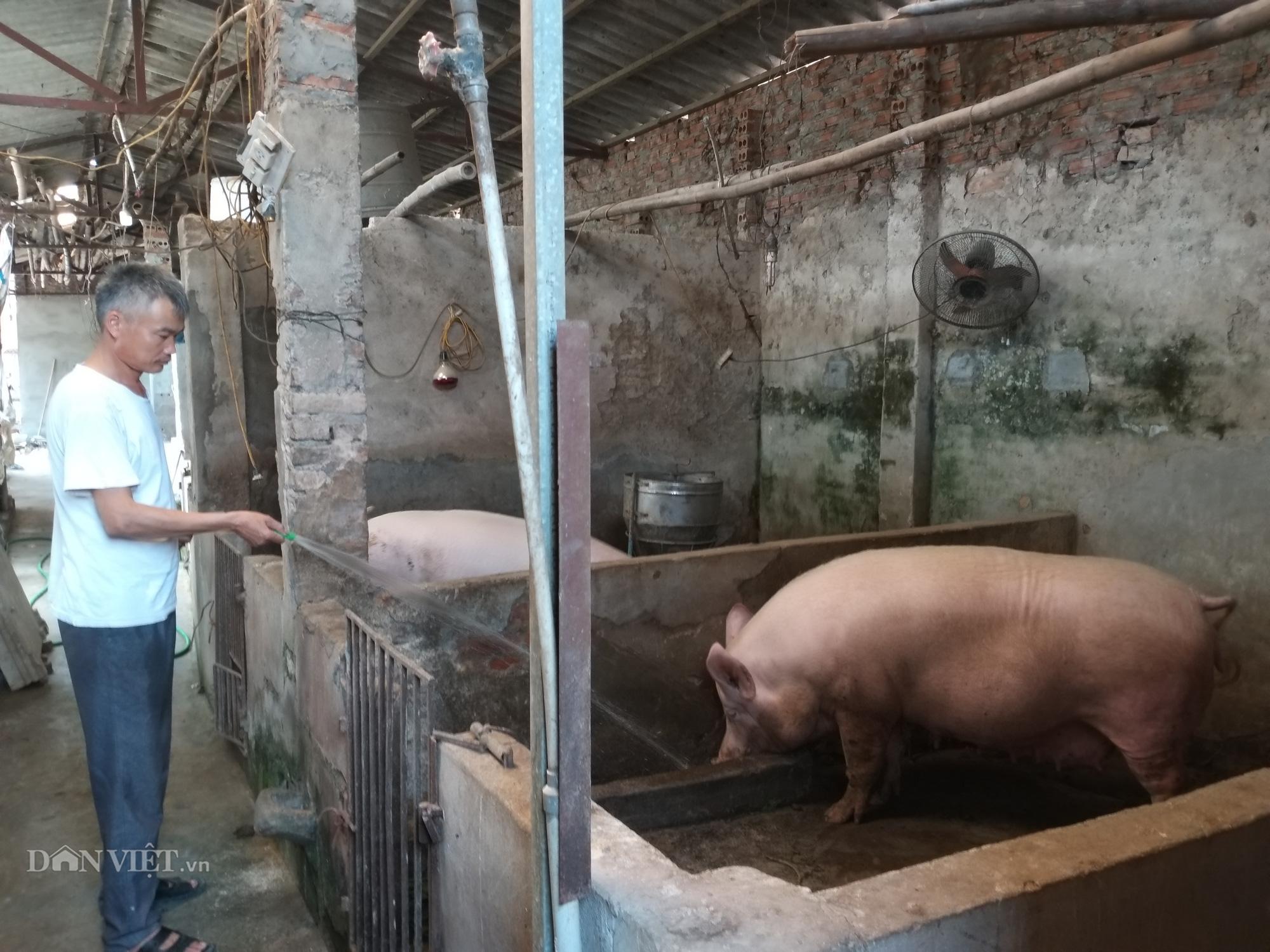 """Dự án LIFSAP kết thúc, dân nuôi lợn Thủ đô cũng """"vỡ mộng"""" làm giàu - Ảnh 4."""