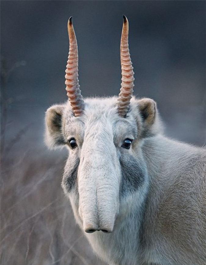 Vẻ đẹp của 10 loài động vật có nguy cơ tuyệt chủng - Ảnh 9.