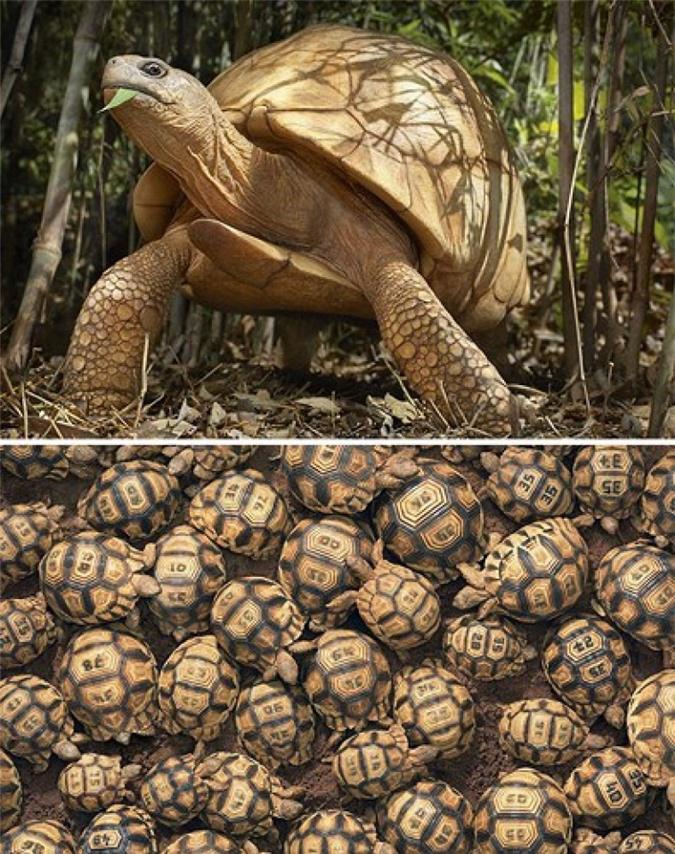 Vẻ đẹp của 10 loài động vật có nguy cơ tuyệt chủng - Ảnh 1.