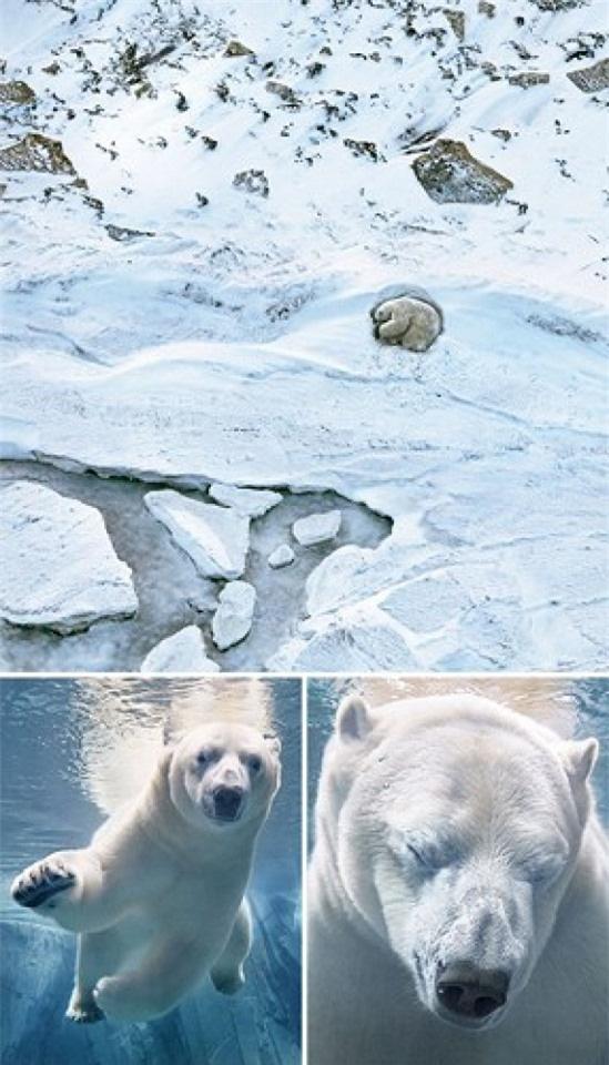 Vẻ đẹp của 10 loài động vật có nguy cơ tuyệt chủng - Ảnh 2.