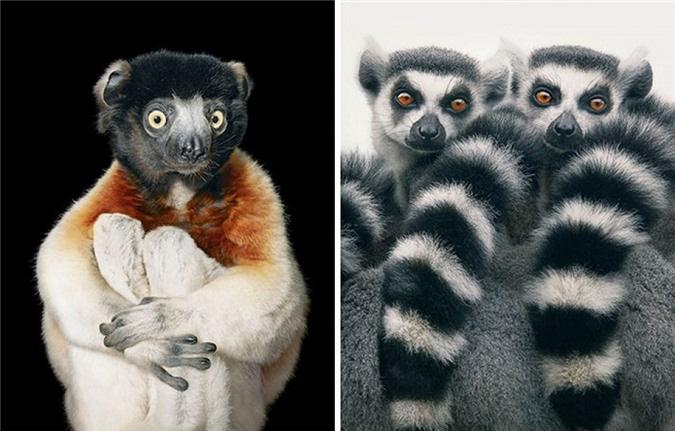 Vẻ đẹp của 10 loài động vật có nguy cơ tuyệt chủng - Ảnh 3.