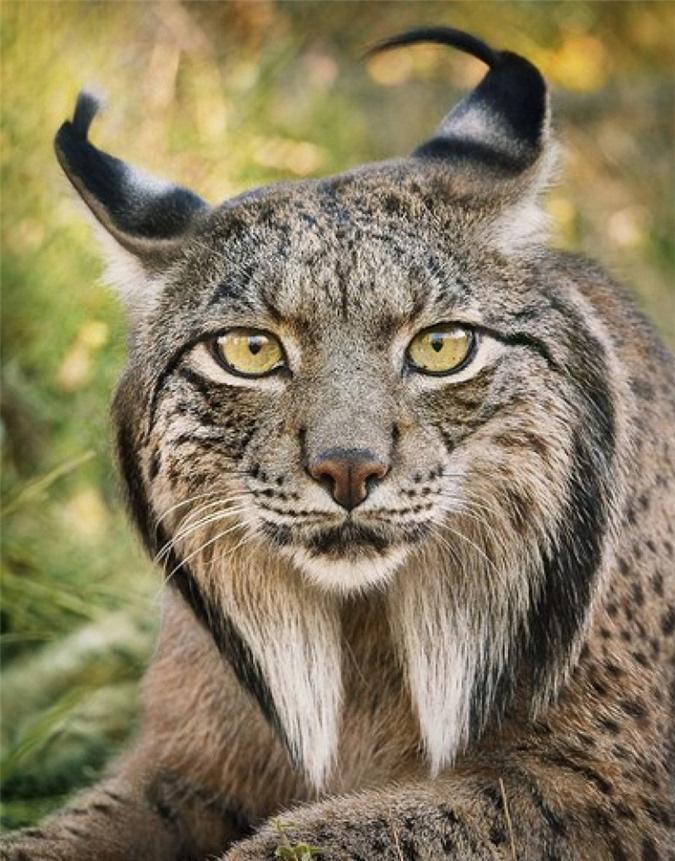 Vẻ đẹp của 10 loài động vật có nguy cơ tuyệt chủng - Ảnh 4.