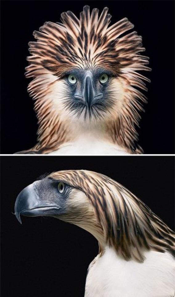 Vẻ đẹp của 10 loài động vật có nguy cơ tuyệt chủng - Ảnh 5.