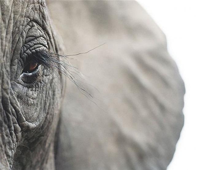 Vẻ đẹp của 10 loài động vật có nguy cơ tuyệt chủng - Ảnh 6.