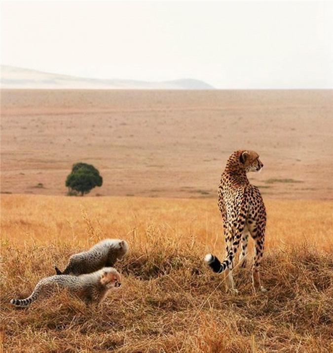 Vẻ đẹp của 10 loài động vật có nguy cơ tuyệt chủng - Ảnh 7.