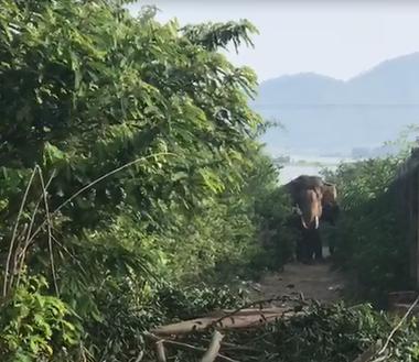 Đắk Lắk: Hãi hùng voi nhà quật chết nài voi - Ảnh 2.