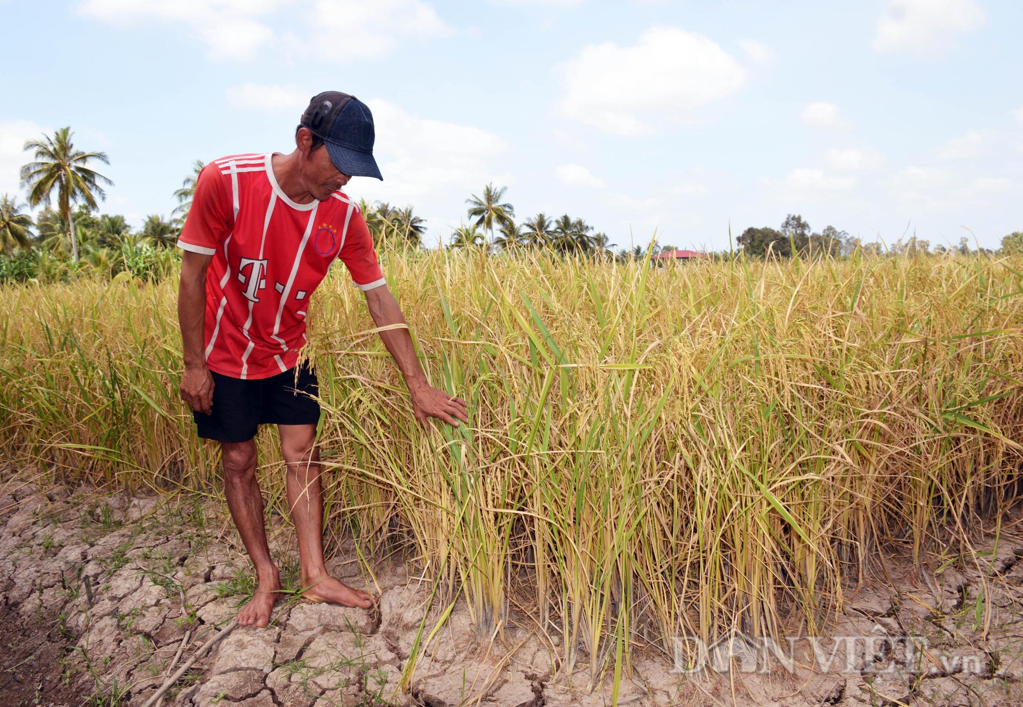 Hạn hán kỷ lục tại Nam Trung Bộ và Tây Nguyên: Sông hồ trơ đáy, đồng khát, lúa chết - Ảnh 2.