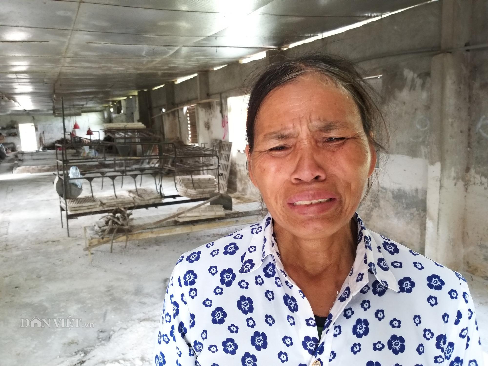 """Đau xót nhìn dân nuôi lợn trong dự án """"triệu đô"""" khóc nức nở vì thua lỗ, lâm nợ - Ảnh 7."""