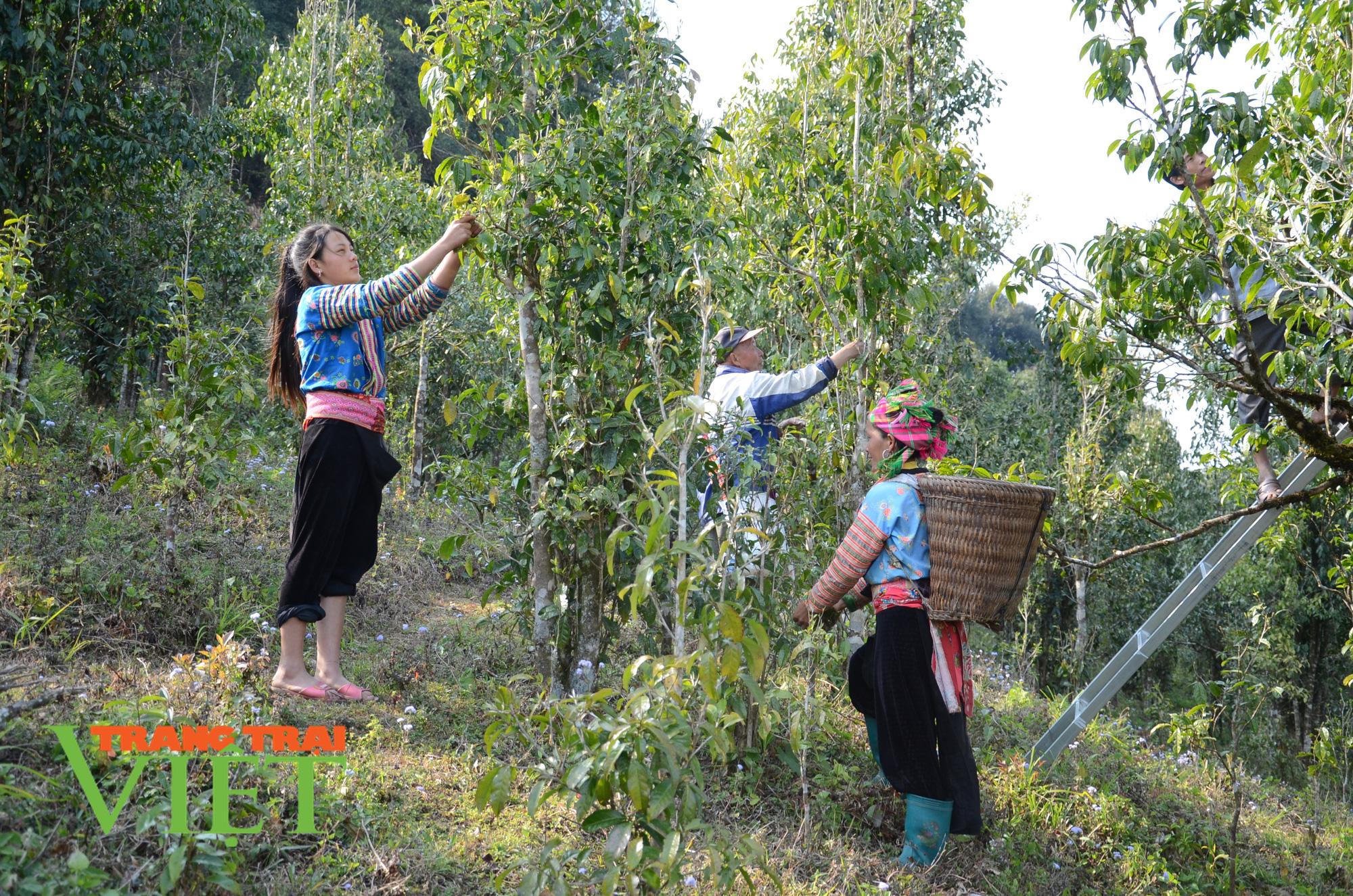 Sìn Hồ mở hướng giảm nghèo từ cây trồng mới - Ảnh 3.
