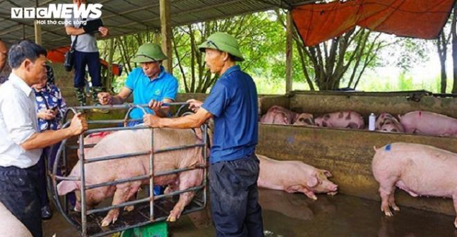 Vì sao Thủ tướng càng chỉ đạo giảm, giá lợn càng tăng? - Ảnh 1.