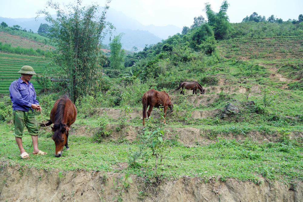 Nuôi ngựa - hướng đi mới của ngành chăn nuôi Bát Xát - Ảnh 1.
