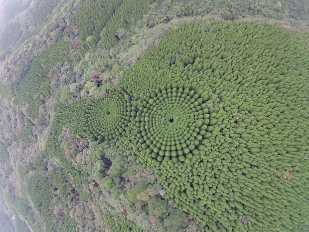 """Mê đắm """"khu rừng ngoài hành tinh"""" ở Nhật Bản - Ảnh 1."""