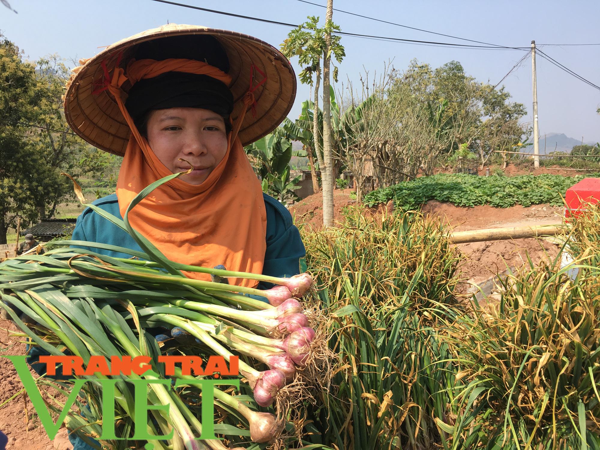Yên Châu: Ứng dụng khoa học - kỹ thuật vào sản xuất nông nghiệp - Ảnh 2.